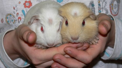 Bily and Zluty